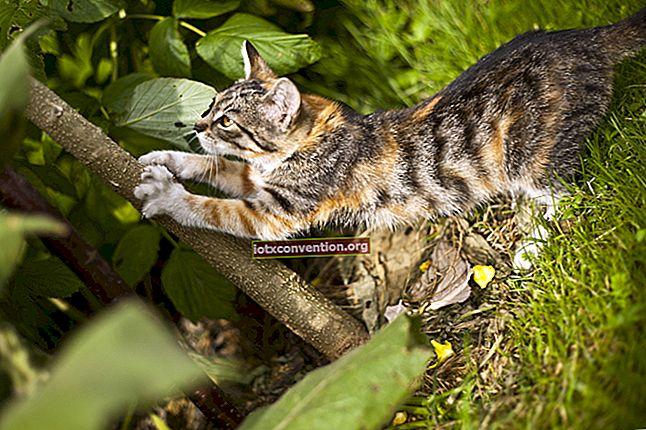 Wie können Sie Katzen aus Ihrem Garten entfernen?