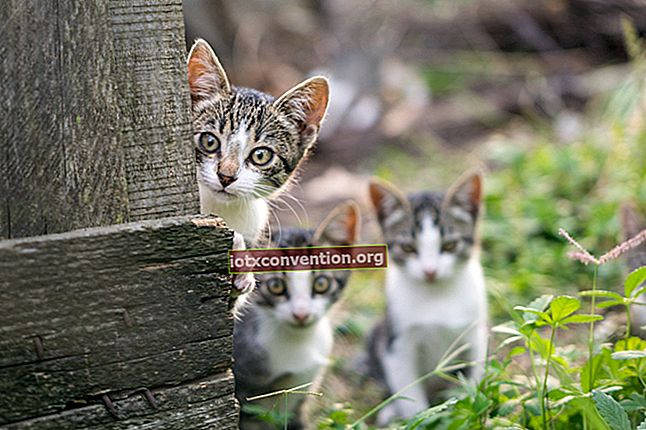 Il repellente naturale che funziona per tenere i gatti fuori dal giardino.