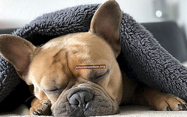 Sangat lucu ! 20 foto anak anjing yang sedang tidur siang dengan boneka mereka.
