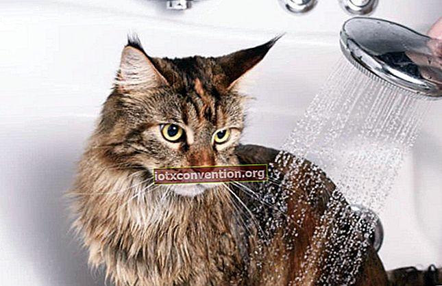 3 Kiat Ekonomis untuk Menyikat Kucing dengan Benar.