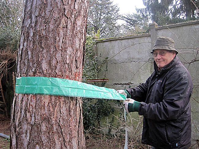 Cara Membuat Perangkap Serangga Untuk Pohon Buah (Mudah & Efektif).