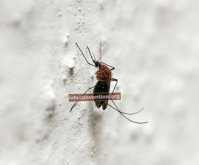 5 Obat Alami Pengusir Nyamuk yang SANGAT Efektif.