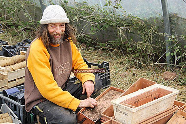 Pascal Poot: Orang Prancis Ini Yang Menanam Sayuran TANPA AIR!