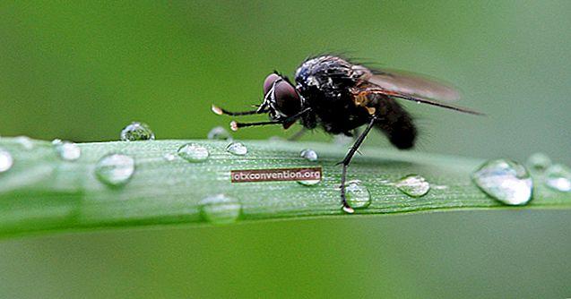 Trik Untuk Menghentikan Lalat Menyapu Di Tempat Sampah.