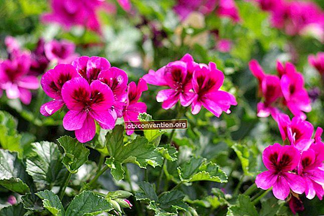 Quante volte innaffiare le piante d'appartamento La guida semplice e pratica.