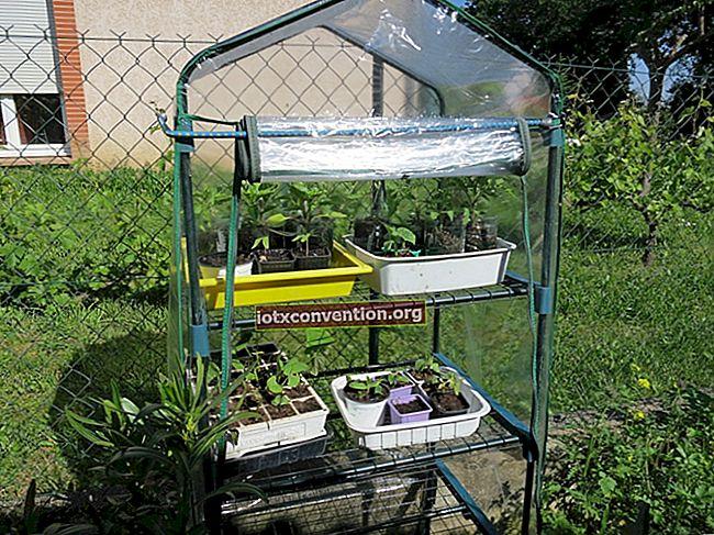 Hur man gör ett mini plantor växthus gratis.