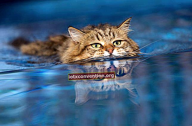 9 Tips Agar CATS Menghindar dari Taman Anda SELAMANYA.