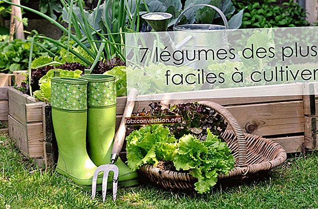 20 Sayuran Paling Mudah untuk Tumbuh DALAM POT.