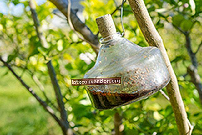 4 Perangkap Buatan Sendiri Untuk Membasmi Lalat.