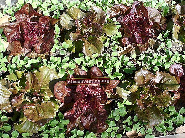 41 Buah Dan Sayuran Yang Tumbuh BAHKAN di Tempat Teduh.