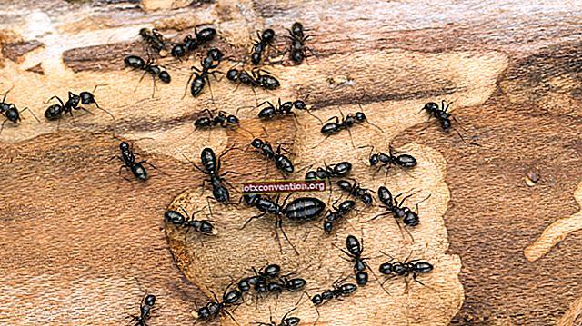 4 consigli efficaci per sbarazzarsi delle formiche a casa.