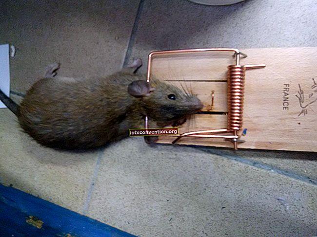 Come sbarazzarsi dei ratti? Usa la Coca-Cola come potente deratizzatore.