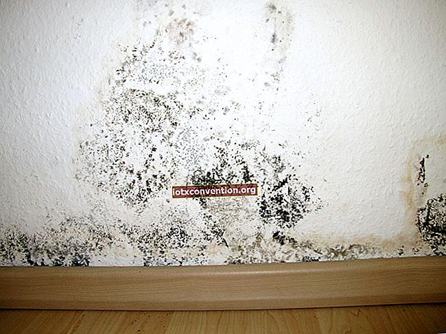 Il suggerimento efficace per rimuovere la muffa dai muri.