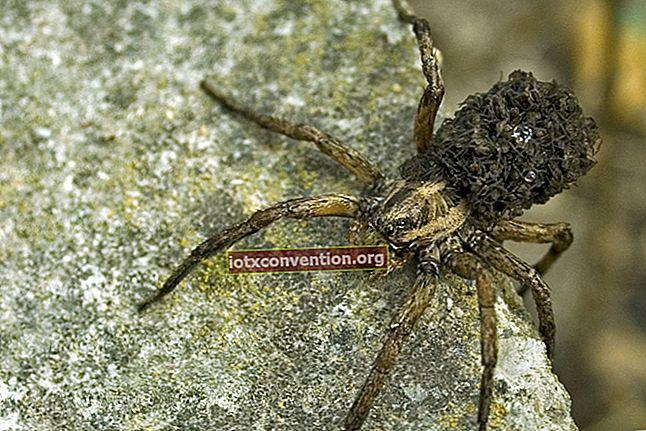 9 consigli naturali per tenere i ragni lontani da casa tua.