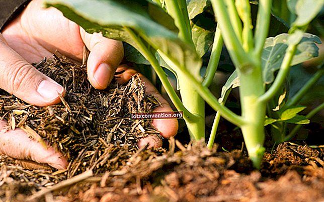 I 7 migliori fertilizzanti da giardino fai-da-te.