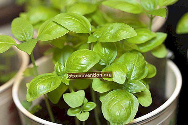 11 piante repellenti per zanzare che dovresti avere in casa.
