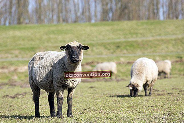 Maglione lavabile in lana termoretraibile? Ecco come ripristinarlo alla sua dimensione originale.