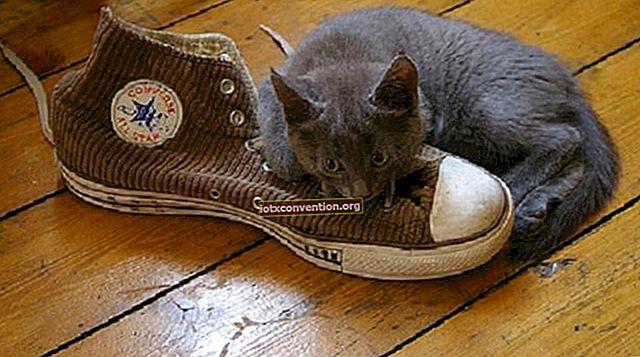 10 consigli super efficaci per rimuovere i cattivi odori dalle scarpe.