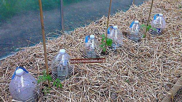Come fare un sistema di irrigazione automatico per i pomodori da una bottiglia.