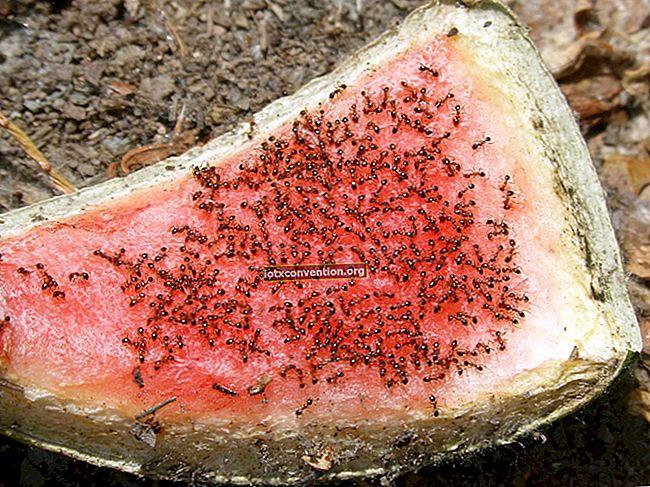 I miei 5 consigli per respingere naturalmente le formiche dalla casa.