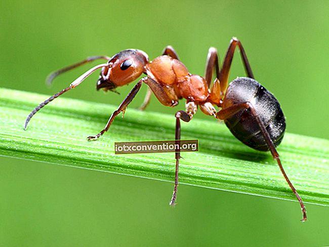 Il segreto per sbarazzarsi rapidamente delle formiche.