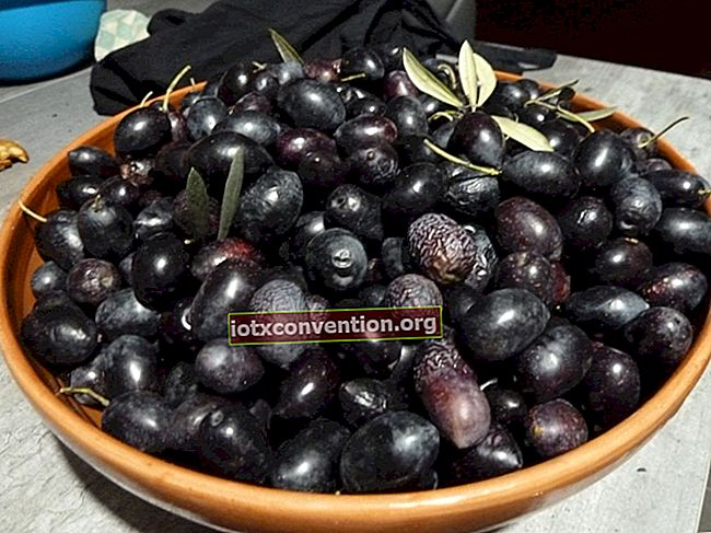Hur förvaras gröna eller svarta oliver?