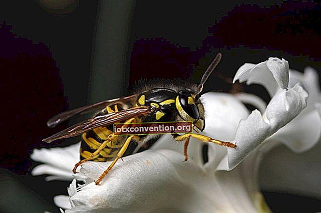 Puntura d'ape: i 14 migliori rimedi da conoscere.