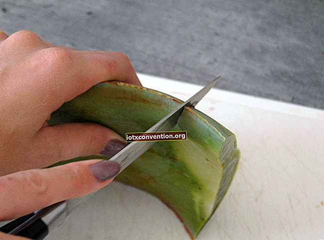 Ecco come tagliare e utilizzare il gel da una foglia di aloe vera.