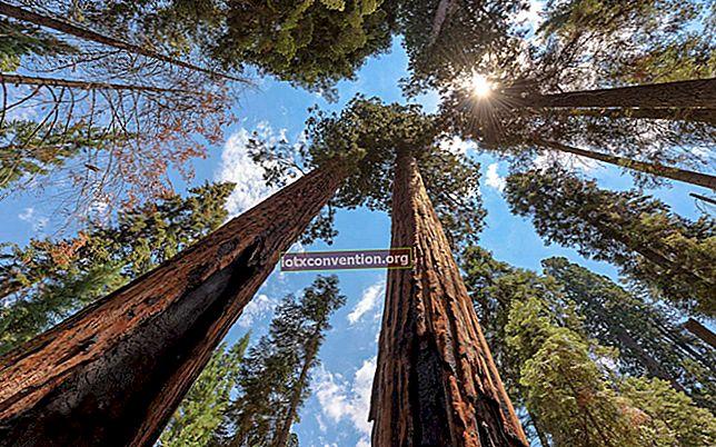 I 10 alberi più INCREDIBILI del mondo.